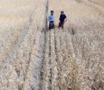Жара в Германии бьет по фермерам