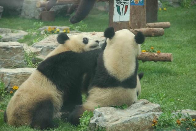 Порно фильмы панды